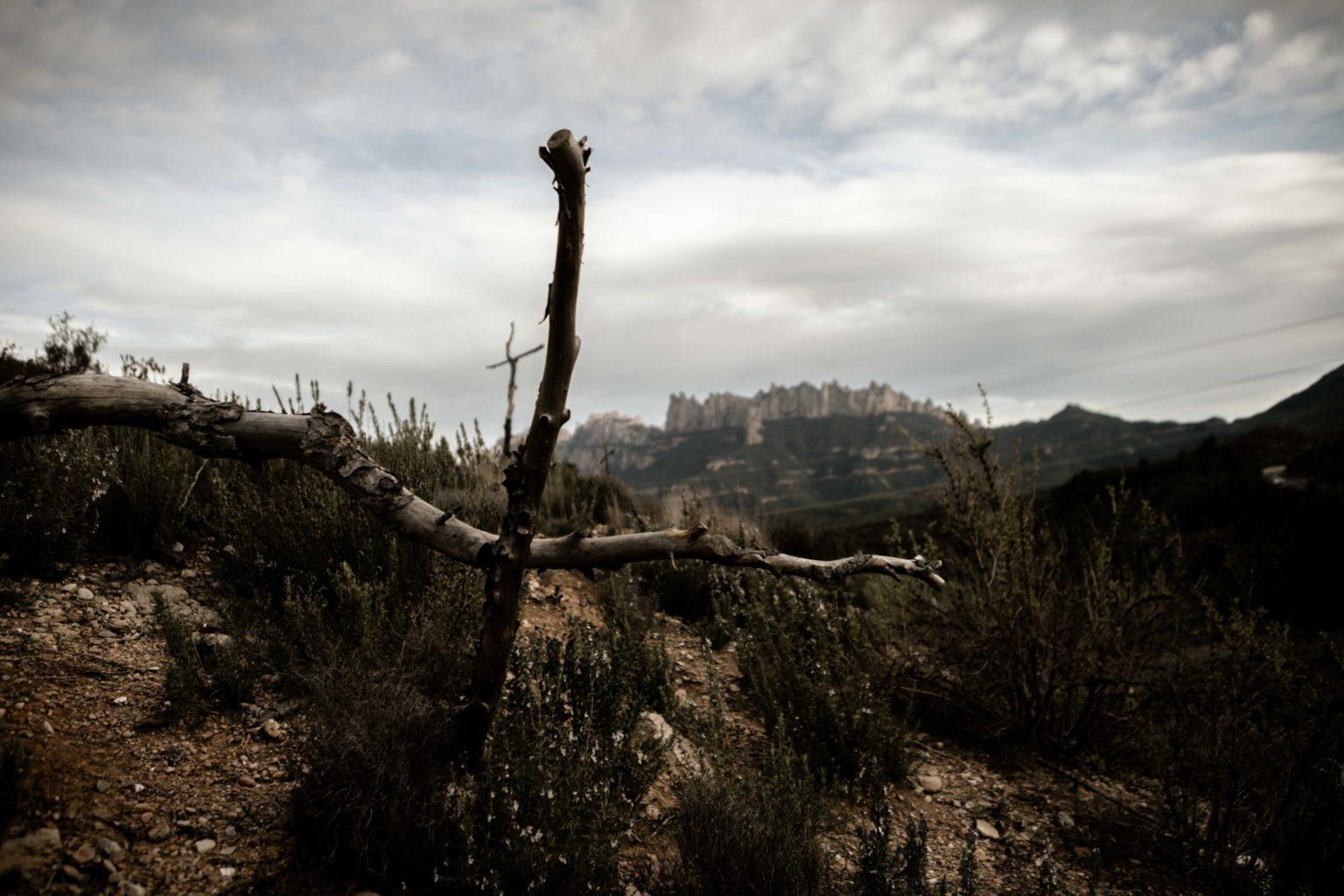 Bosc de las creus